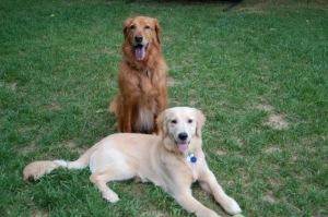 How Be Dog Happy Began - summer 2006