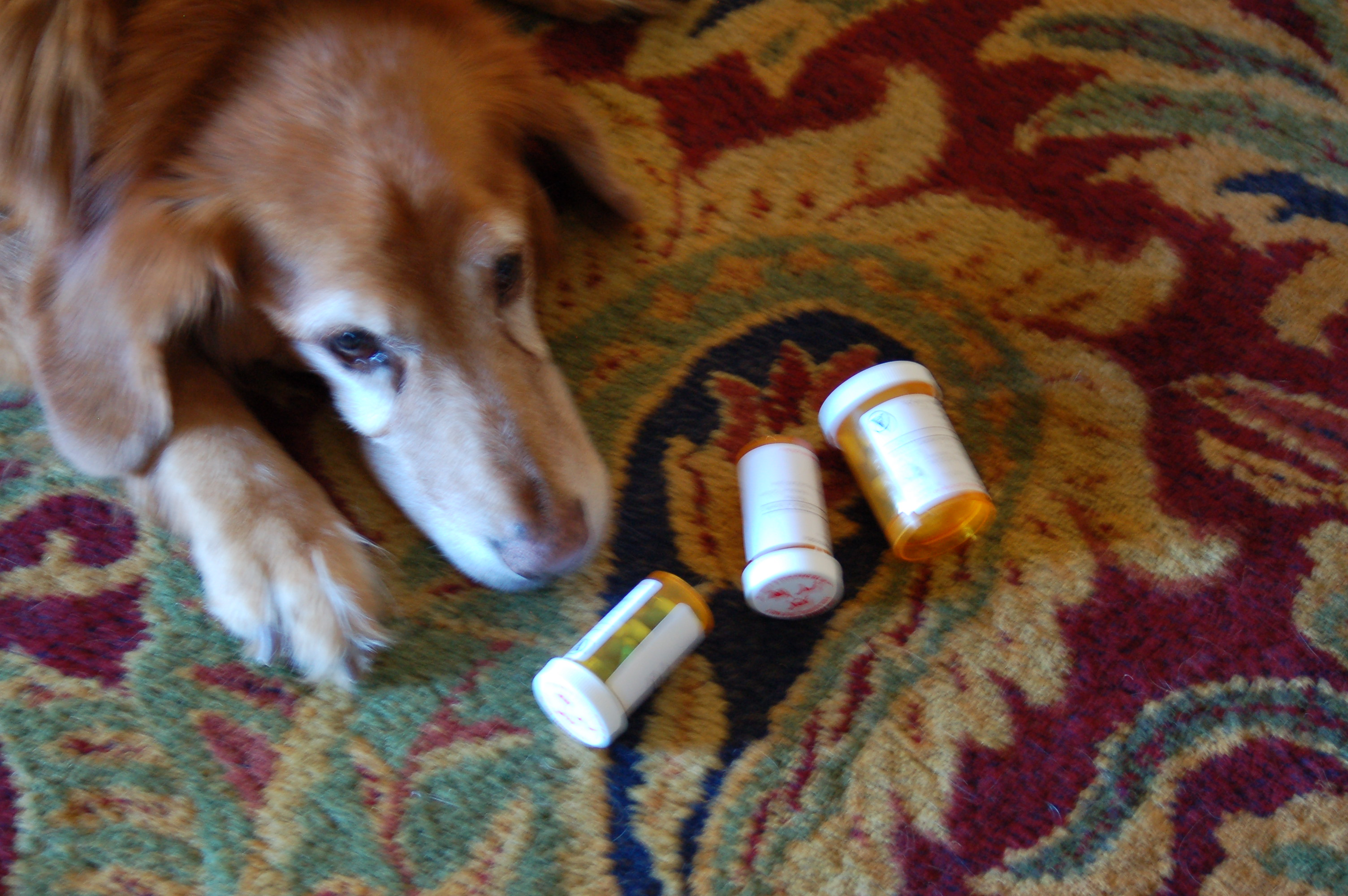My pill-resistant dog