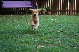 Come, dog, come!