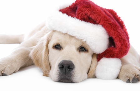 Joy to the Dog!   Tips To Keep Your Pooch Happy and Safe During the Holidays.