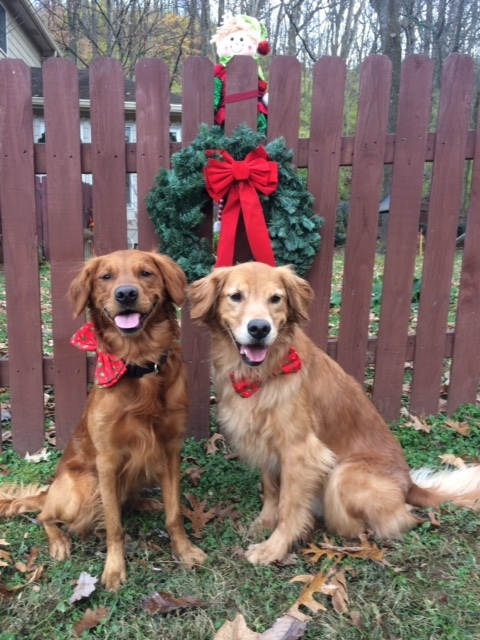 Grady and Dawson's Holiday Stress Busters