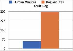 A bar graph titled Adult Dog, showing two bars, one for Human Minutes, and one for Dog Minutes. The Y-axis shows numbers from zero to 300. The Human Minutes bar shows 60 minutes, while the Dog Minutes bar shows 300 minutes.